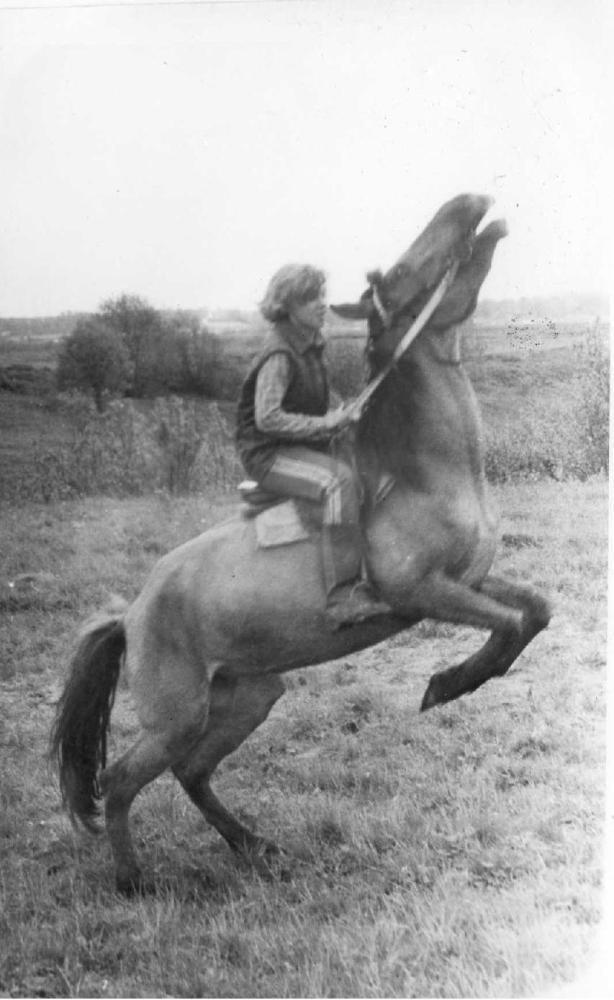 Таких абсолютно диких лошадей прнивезли из казахских степей в Ручьи в 1985г. для производства кумыса. Тип породы назывался Джабе. Табунный жеребец удрал по дороге, спрыгнув с поезда. Казахи разгружали кобыл верёвочным арканом за шею без трапа прямо на бет
