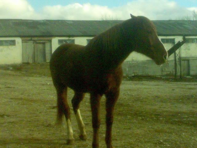 Замечательный Конь