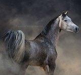 Выступала на ЧУ по 5 летним лошадям в июне 2021г