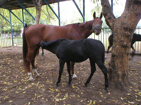Мотя и Миска, октябрь 2004