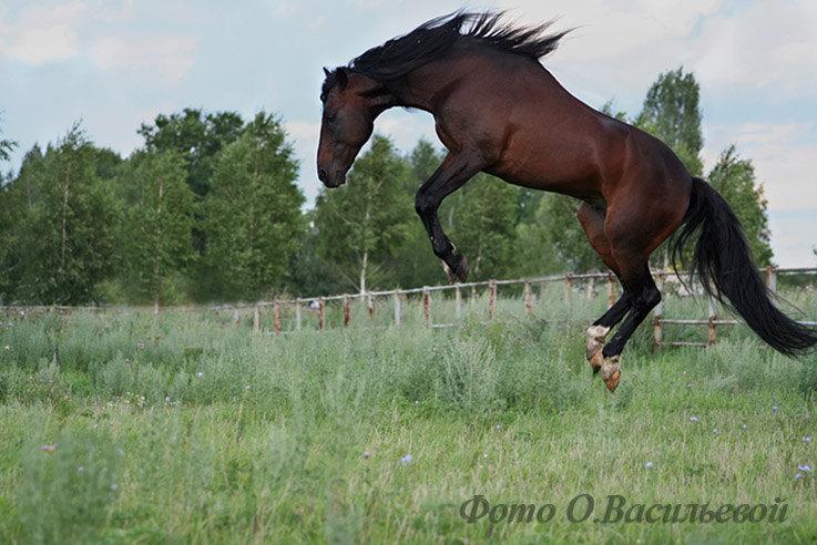 И только лошади летают вдохновенно!