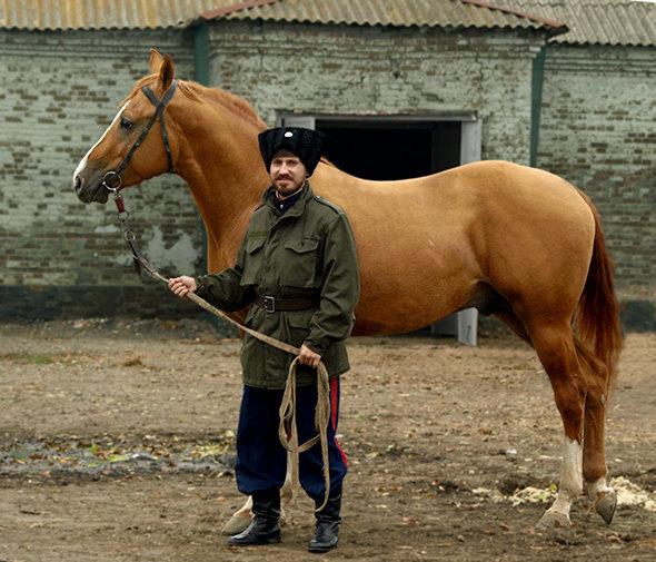 лошадь - Инвест конзавод Целина