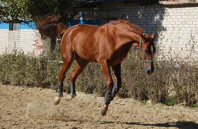 Кто сказал, что лошади не умеют летать...