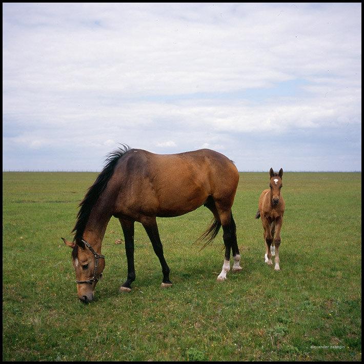 Будённовский конный завод