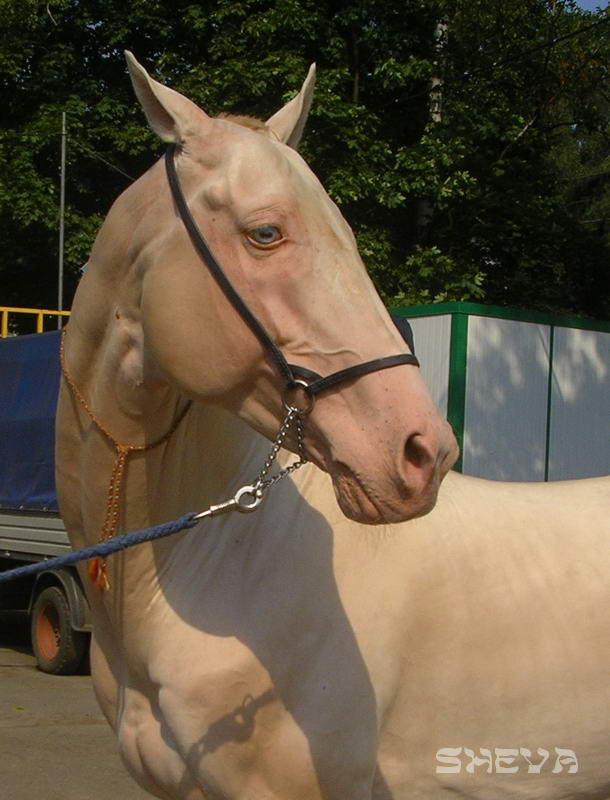 Эквирос-2006