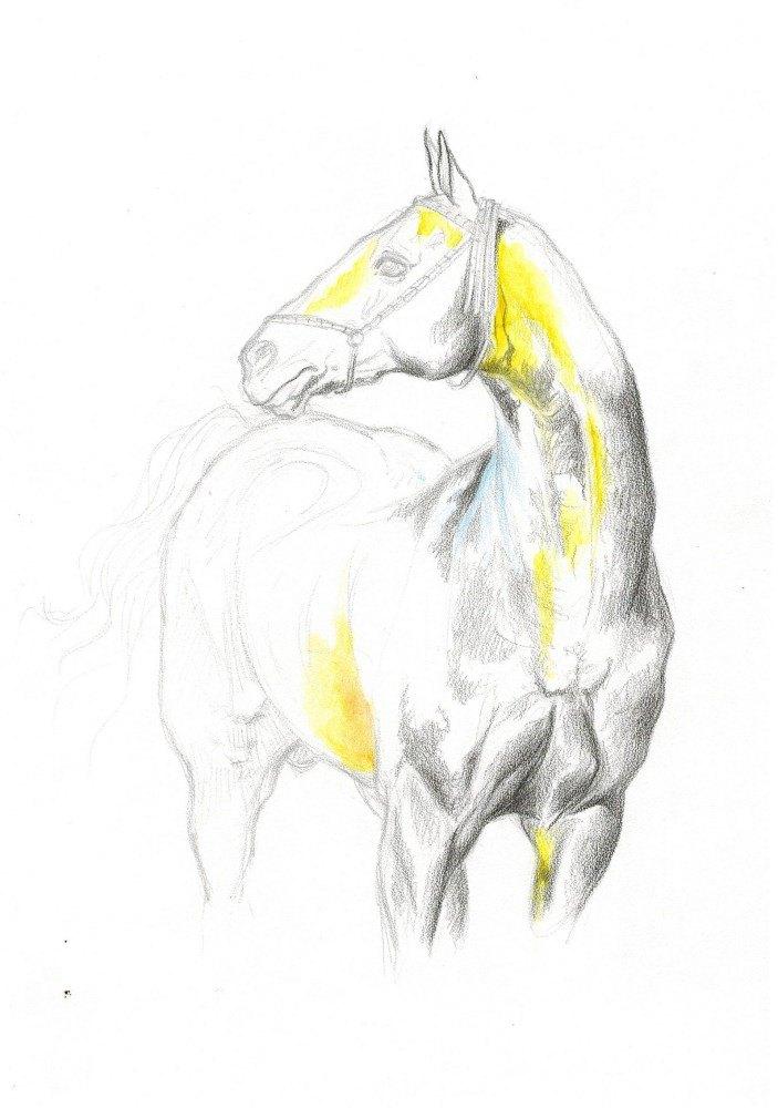 Пробую рисовать акварельными карандашами, пока нравится, но результат предвидеть не могу)) Мургаб, по фото А. Бабоева.