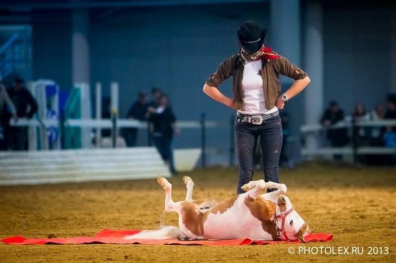 Шоу программа с участием  американских миниатюрных лошадей из Идальго. Фото Алексии Хрущевой.