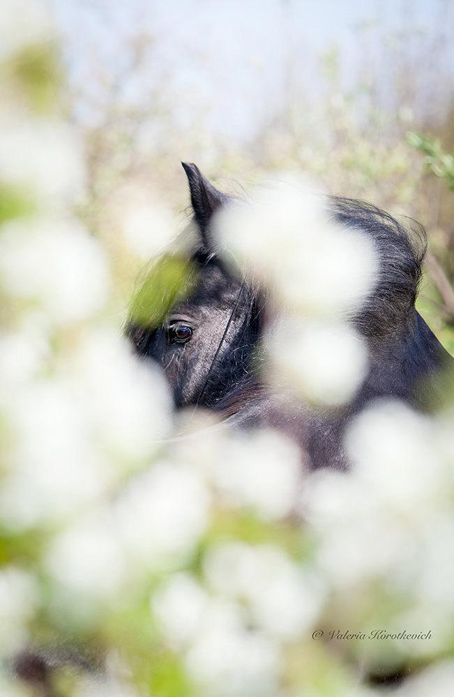 Замечательная кобыла Goodshapes Fairi Lady в весенних цветах