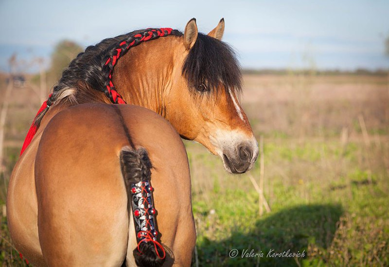 """Подарила коню на ДР нахвостник - скрыть """"срам"""". смотрится весьма симпотично"""