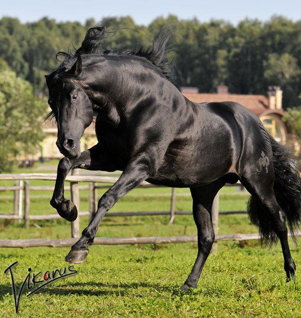 лошадь принадлежит Ксении Петровой