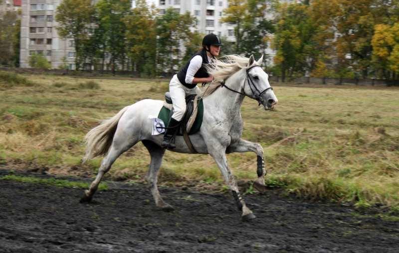 Скачка частных лошадей