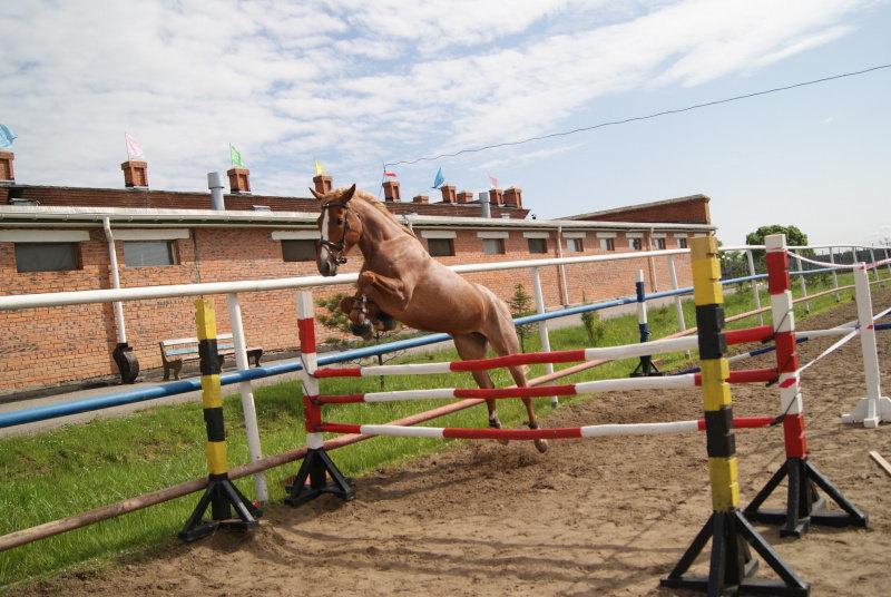 Моя лошадь