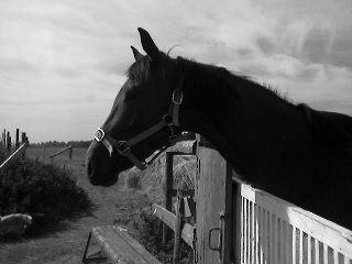 Забыла как лошадь звать