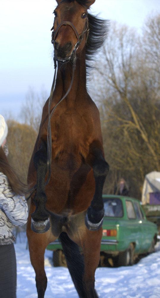 Совершенно неожиданный момент не для кого, разумеется, кроме лошади:)))