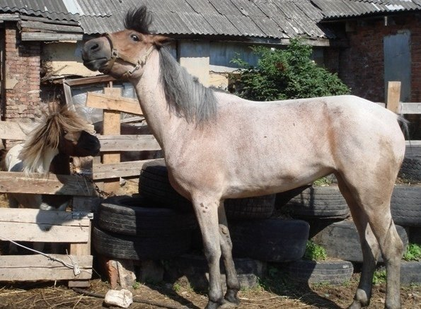 Кобыла Жемчужина решила повыбражать перед мереном пони Тузом