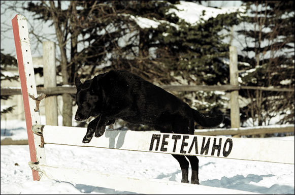 Собаки не хуже лошадей могут участвовать в конкуре!