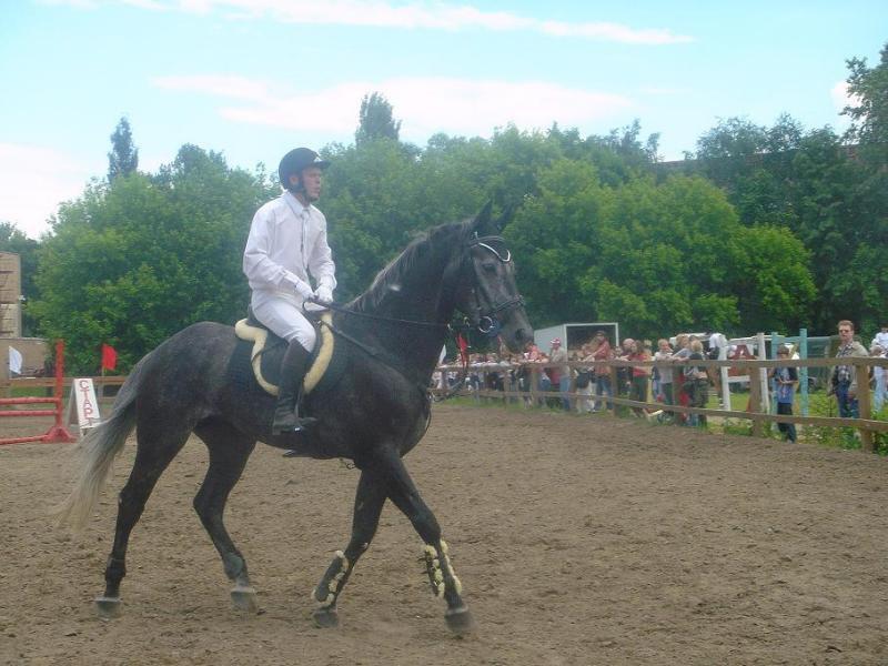 Красивый серый конь.Я была от него в восторге.