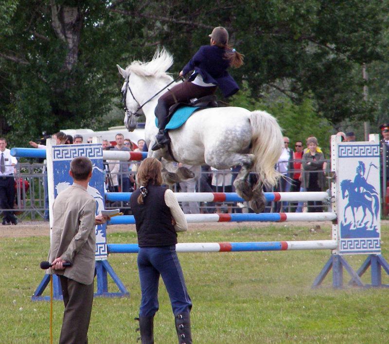 Высота 150 см, лошадка: помесь тяжика с орловцем