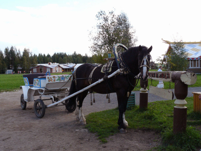 В деревне Мандроги такие лошадки катают туристов