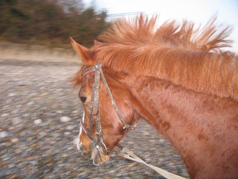 одной рукой держу коня, второй фотоаппарат, а он бегает вокруг меня и постоять ну никак не хочет, тут еще ветер подул и грива дыбом встала!