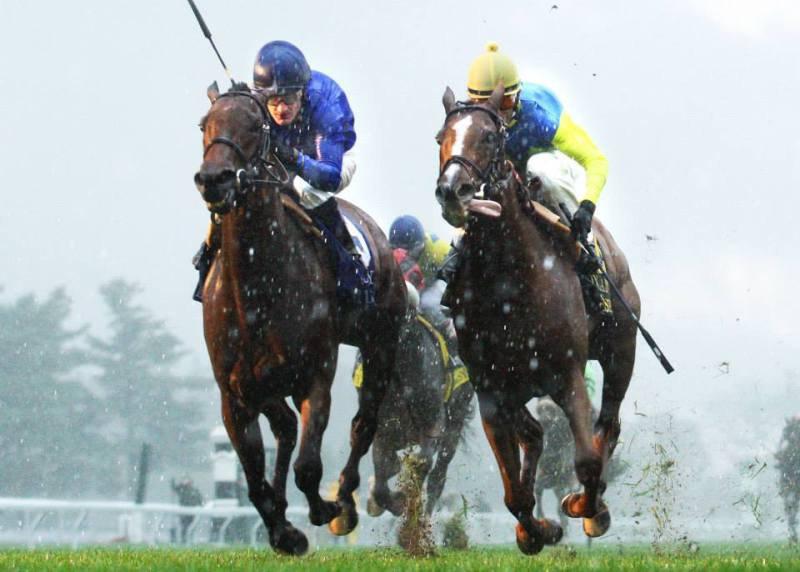 Ипподром Keeneland 2013 год, скачка First Lady Stakes - Gr. 1