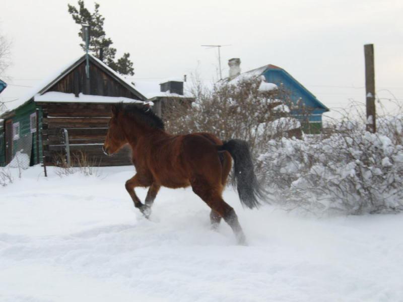 по свеже выпавшему снегу