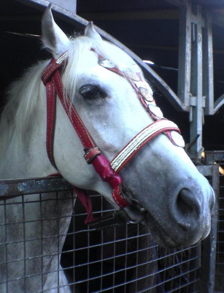 Лошадка из цирка