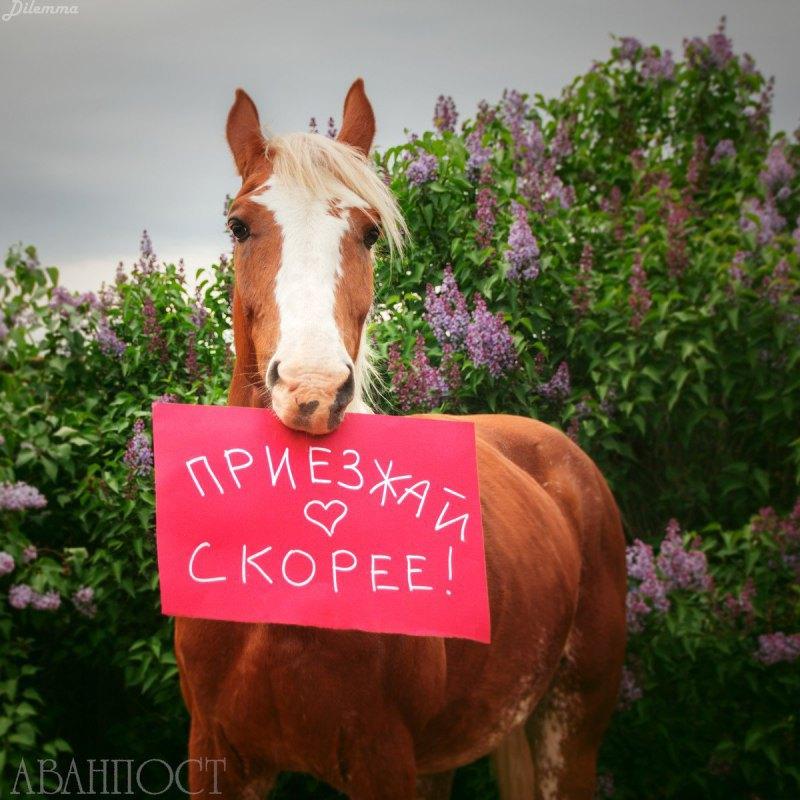 Аванпост, фото Елены Серовой
