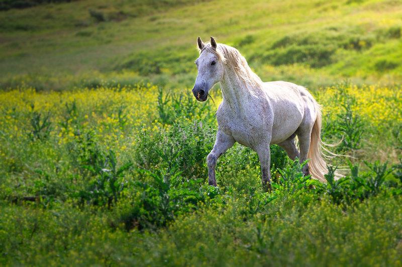 4 годаназад никто не мог подумать, что этот конь сможет  восстановиться после очень серьезной травмы.