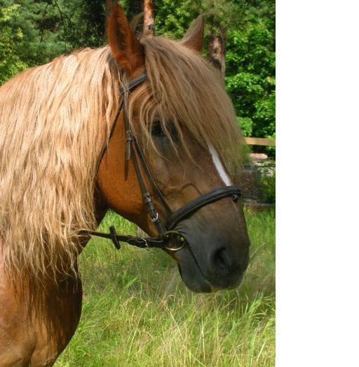 Портрет богатырского коня