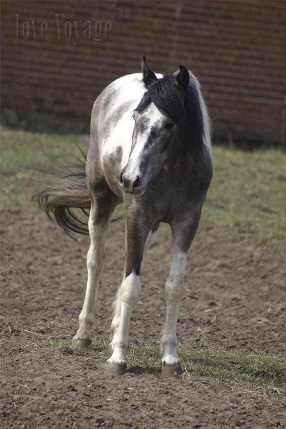 арабо-башкирка