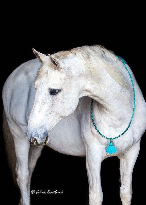 Будапешт - конь философ) кордэ от Рашель