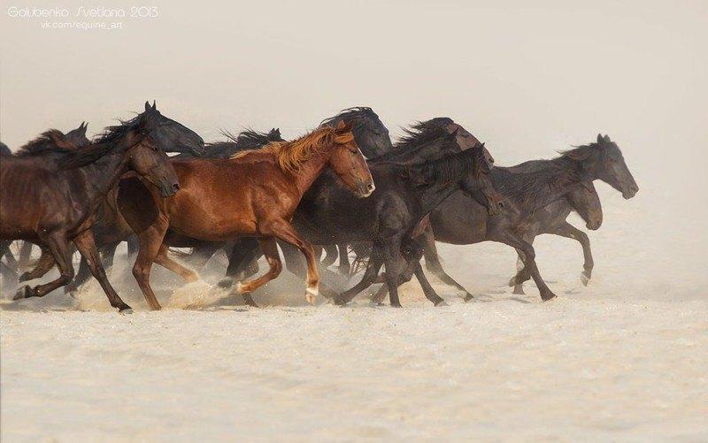 Табун диких лошадей необитаемого острова..