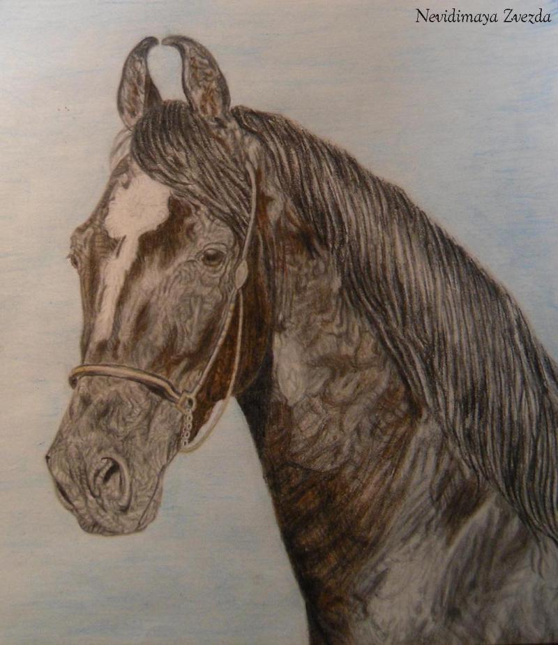 Акварельные и простой карандаши,  А4. По фото с сайта к/з марварских лошадей в Индии