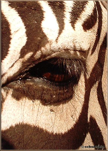 "в зоопарке под именем ""сафари""..."