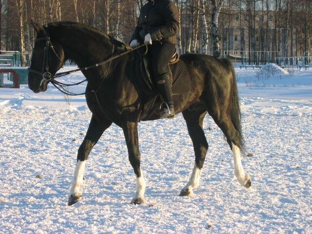 Эффектный конь