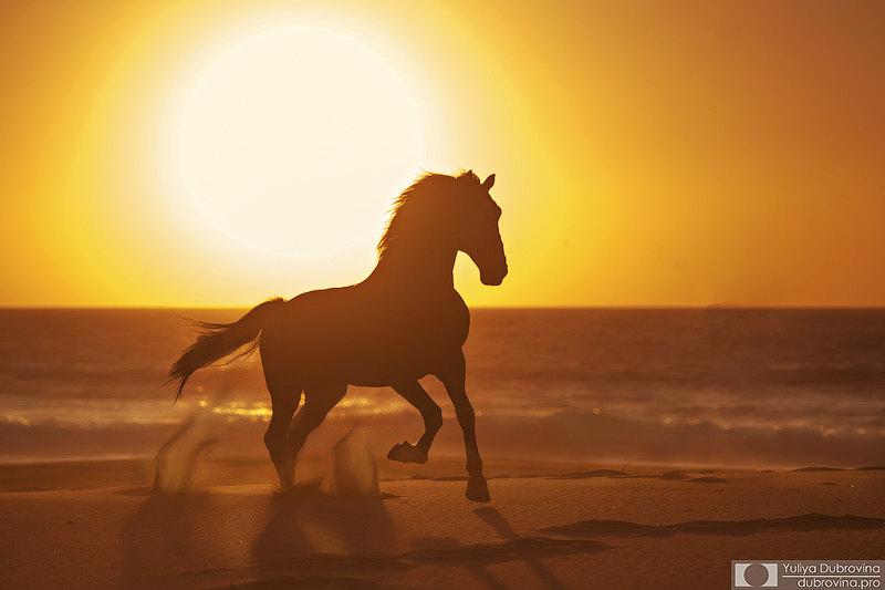 Закат для фотографа - уже праздник))) а с конем, да на океане - подавно! Жеребец лузитано Табернейро и его закат