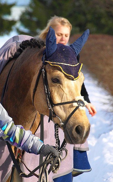 Вот так выглядят наши эстонские арабы. Ростом с пони :D