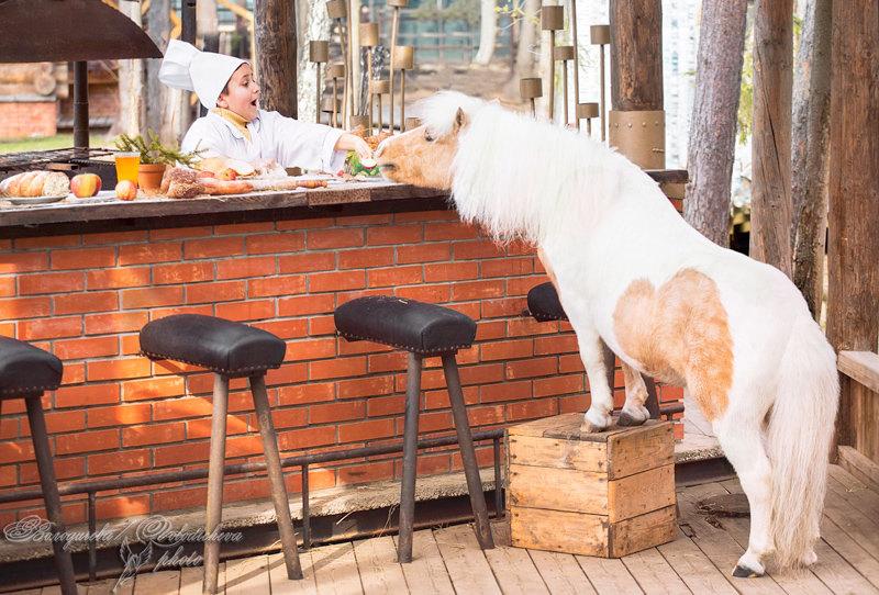 """Проект для ресторана """"Причал 95""""  модели: Поварёнок - Женя Шетлендский пони - Пломбир (владелец Татьяна Огаркова)"""