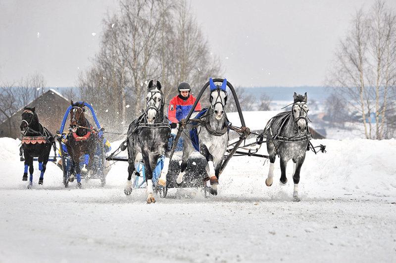 соревнования русских троек в Вологде 21.02.15