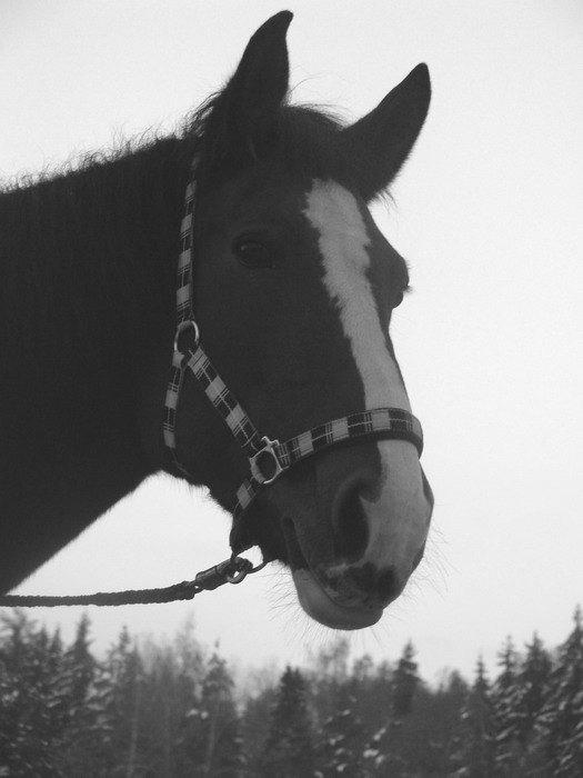 лошади, Катушки. Спасённой с мяса..