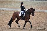 Идеальная младшая лошадь / учитель