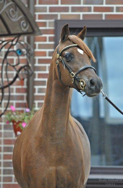 Sandra- SANDRA Великолепная пони, 131 см в холке, 2004 гр, выступает на соревнованиях по выездке класса L2, имеет большой турнирный опыт в Европе.Идеальна для детей разного уровня подготовки. http://mini-pony.ru