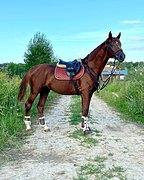 Шикарный конь любителю / спортсмену
