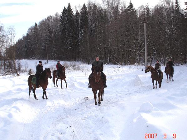 Наша группа на маршруте (лес, поле, шаг, галоп, карьер, преодоление препятствий)
