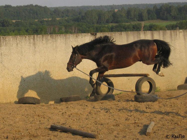 КСК Гармония, лето 2007, Шерлок, конь принадлежит ЧВ