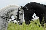 Требуется КОНОВОД для лошадей пенсионного возраста