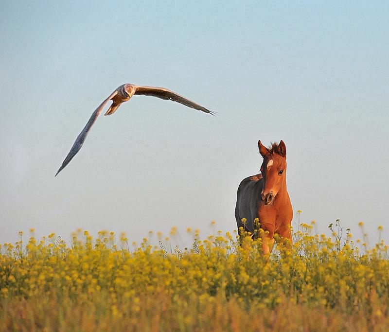 Из жизни свободных лошадей Ростовского заповедника