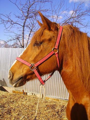Наша любимая лошадушка