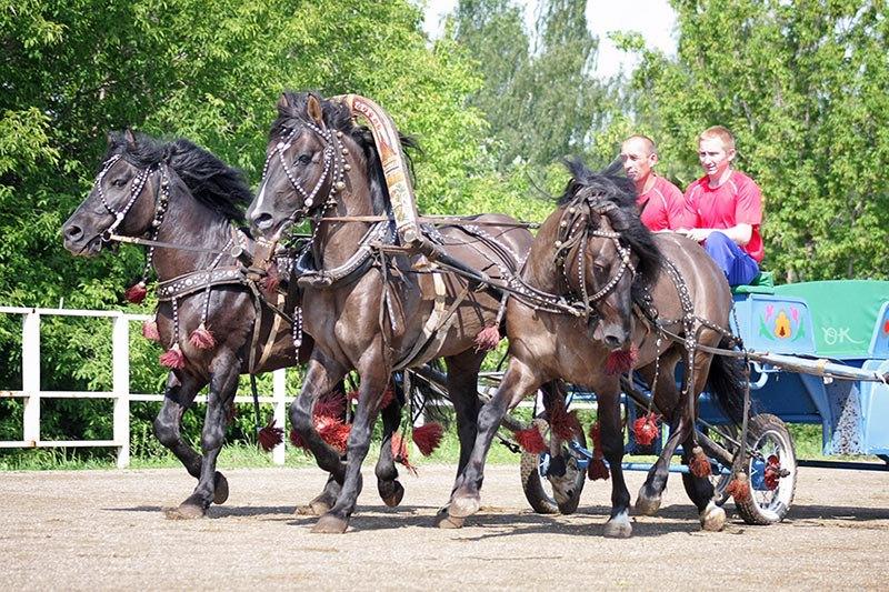 "Выставка вятских лошадей ""Золотая вятка"" на Ижевском ипподроме. Слева на право - Тибет, Резвый, Гобелен"